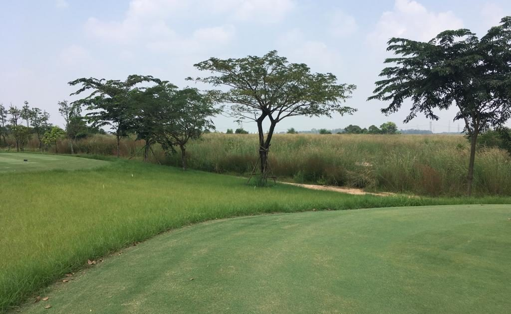 native grasses for golf courses