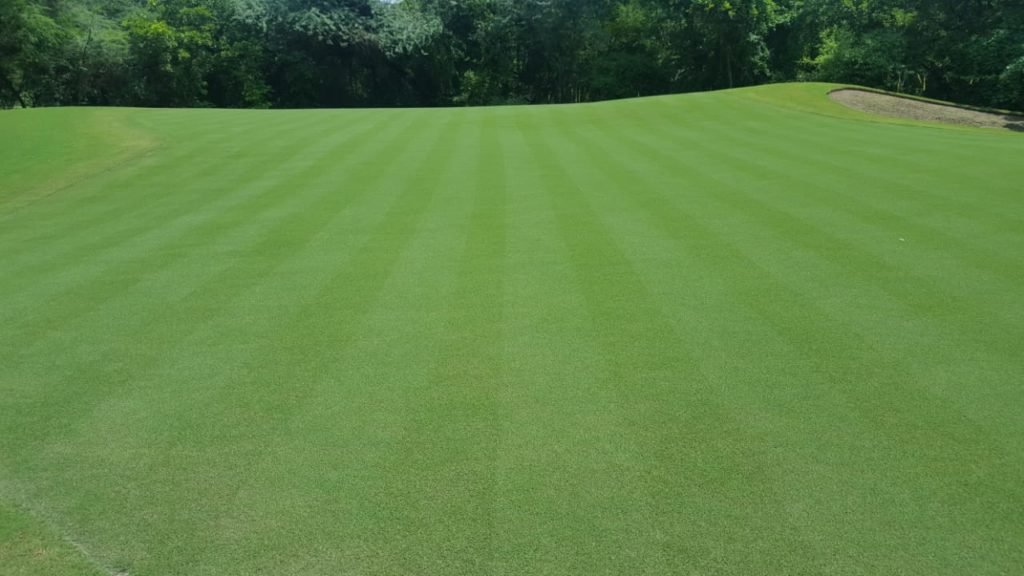 improved golf greens in india featuring miniverde ultra dwarf bermudagrass