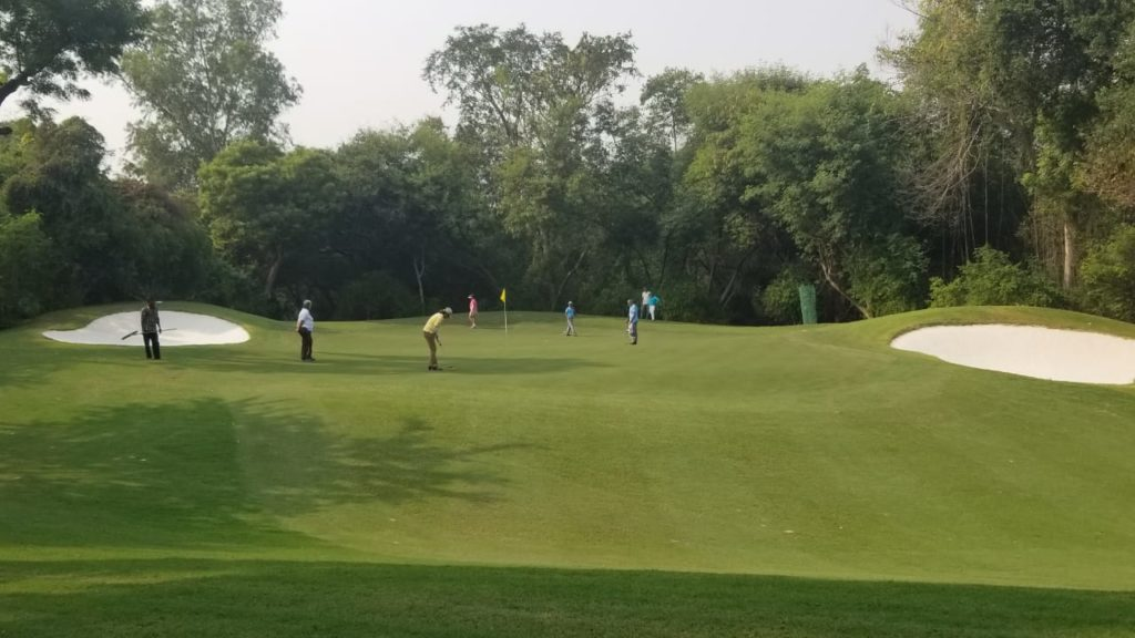 improved golf greens at delhi golf club with miniverde ultra dwarf bermudagrass