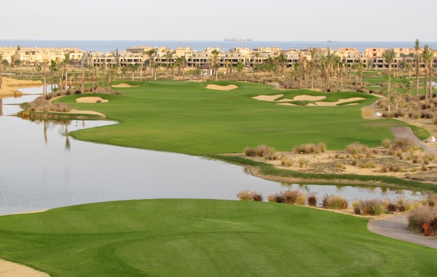 Platinum TE Paspalum Golf Turgrass in Egypt