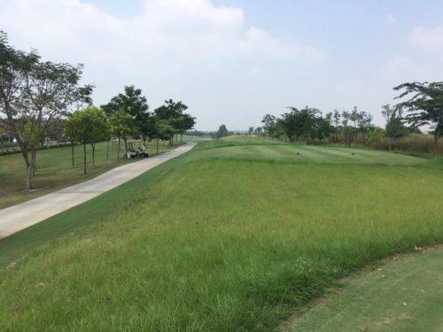 native grass in Vietnam