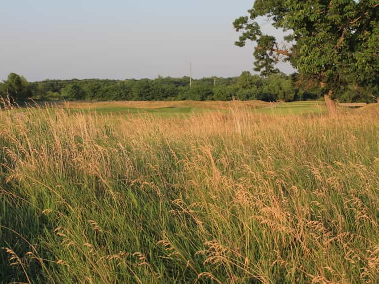 native grasses offer environmental benefits
