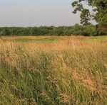 Atlas Links Native Grass Cool Season Blend