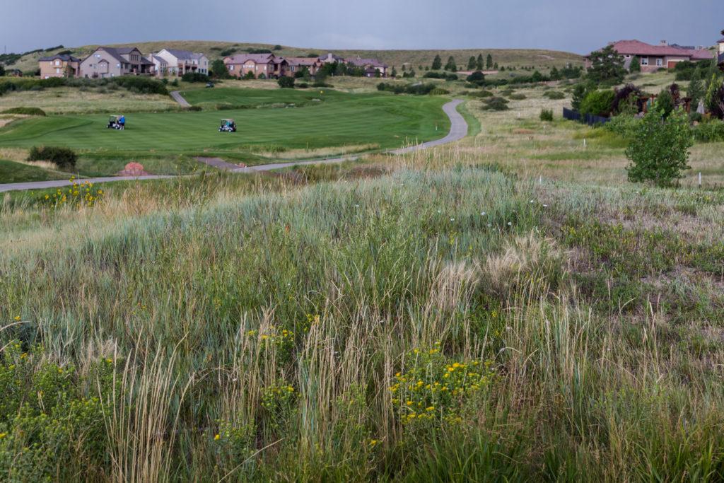 native grasses landscape