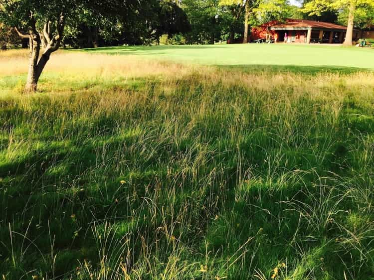 native grasses require little or no maintenance