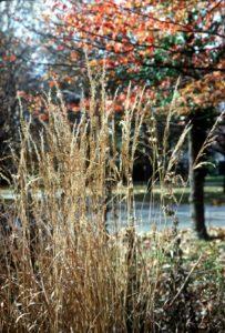 native grass selection