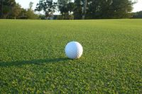 Sunday™ Ultra-Dwarf Bermudagrass