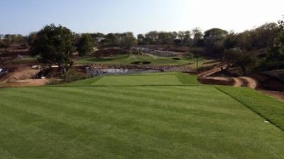 New Pure Dynasty Seeded Paspalum Makes an Impact