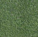 Silver Sun Perennial Ryegrass