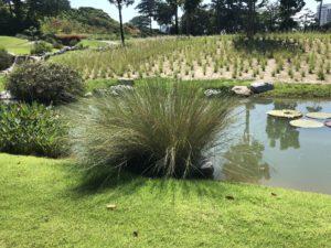 benefits of choosing native grass